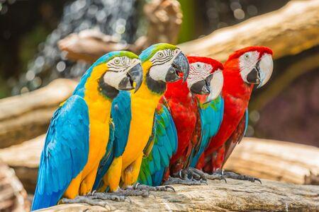 Macaw parrot birds close up Imagens