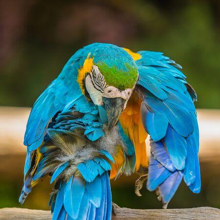 Macaw parrots bird close up