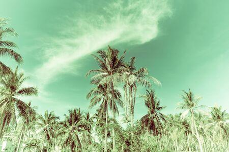 Retro coconut tree and sky Imagens