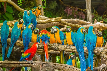 Macaw parrots in forest