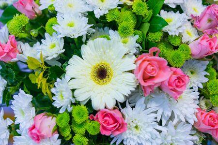 Bouquet gebera flower close up background