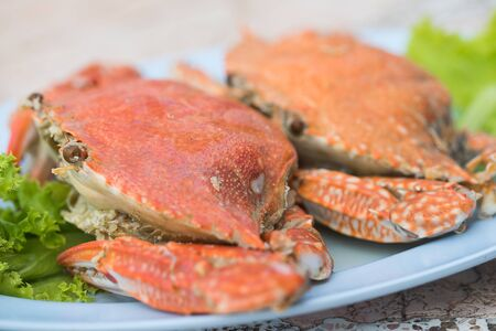 Steam crabs close up Imagens - 131768732