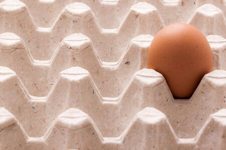 Egg in paper tray