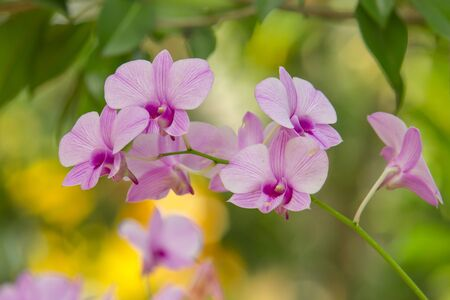 purple orchids flower close up Imagens