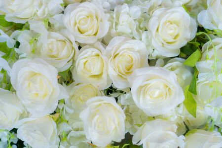 White roses decor in wedding ceremony close up background