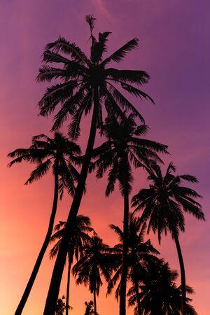 Silhouette coconut tree on twilight sky background