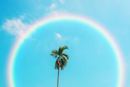 Beach palm tree on blue sky with rainbow. Imagens - 134525023