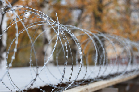 wire fence: Fencing with spiral barbed wire against the background of autumn foliage.