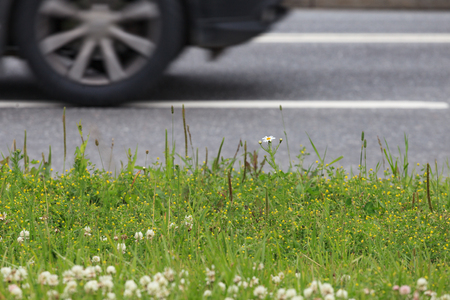 A fragment of a summer lawn against the background of a roadway. Stock Photo