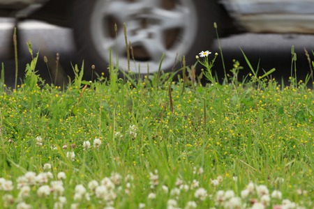 A fragment of a summer lawn against the background of a roadway. Standard-Bild - 96247502