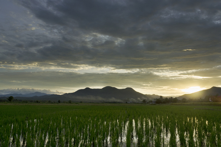 ricefield: Beautiful ricefield with moutain in background