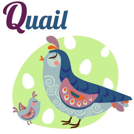 animal alphabet: Cute animal alphabet for ABC book. Vector illustration of cartoon quail. Q letter for the Quail