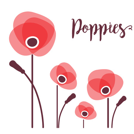 red poppy: Red poppies in a row. Red poppy Isolated on white background. illustration of red poppy flowers