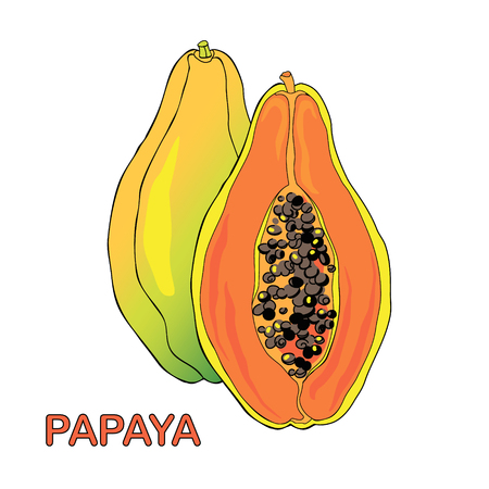 Vector illustration of ripe and juicy papaya fruit. Whole fruit and half piece. Ilustracja