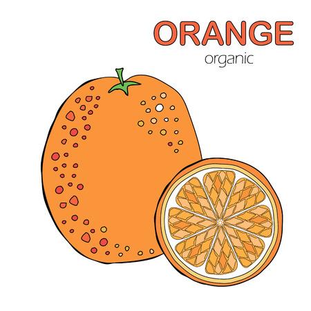 Hand Drawn organic Orange fruit on White