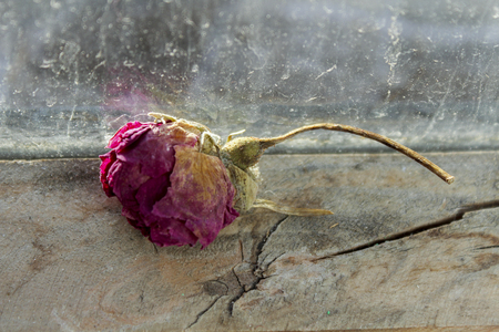 Dried rose on a wooden window sill. Its raining behind the glass.