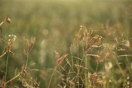 grassfield: grassfield motion blur Stock Photo