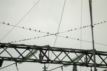 A flock of Hirundine sp. rest at electricity cable during their migration. This bird found in Semanu, Gunungkidul, Yogyakaerta special region on (211016).