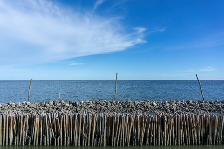 Dried bamboo together into the sea. Prevent coastal erosion from seawater.