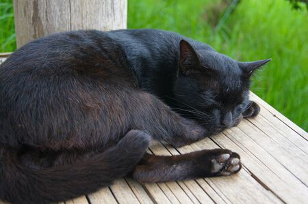 The black cat slept on the yellow wooden litter. There is a  green grass background
