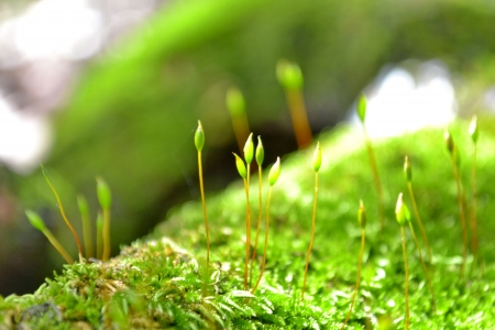 MOSS In a tropical forest  Thai country  photo