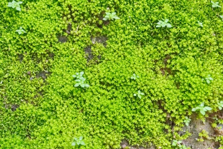 stone cold: MOSS In a tropical forest  Thai country