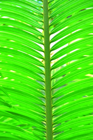Texture   Leaves Green Leaf The plants    photo