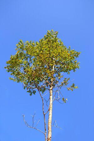 Background trees, plants photo
