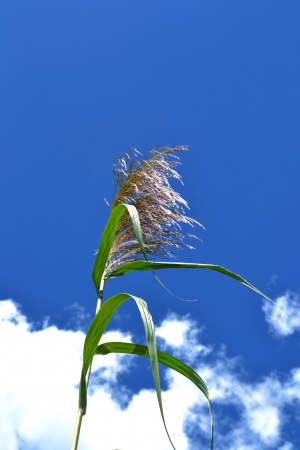 Grass  flower in sky background photo