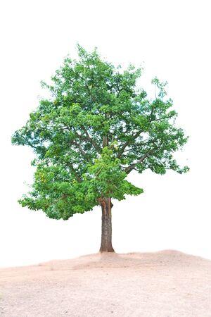 distinctive: single tree,Perennial plants are distinctive