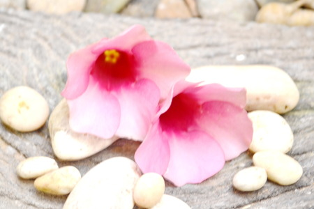 zen stones with  flower arranged on wooden board  photo