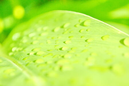 Raindrops on grass Big water drops on green grass blades photo