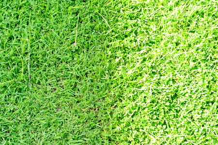 Green grass surface photo