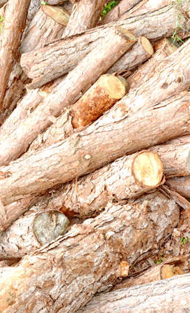 Wood preparation Industries that have an impact on the environment. Stock Photo