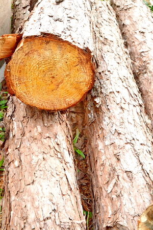 basic material: Wood preparation Industries that have an impact on the environment. Stock Photo