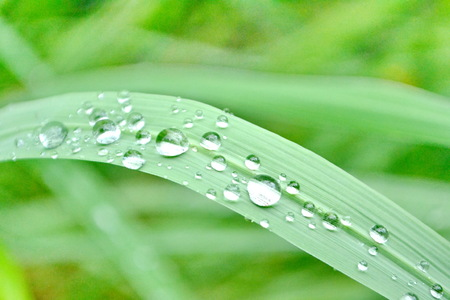 Big water drops on green grass blades, extreme macro photo