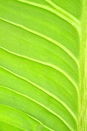 close up plant Leaves texture background photo