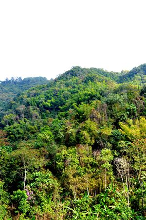 Tropical forest Thailand at Nan province Thailand photo