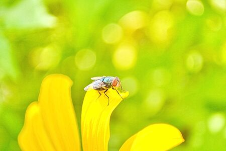 green fly on the flower photo