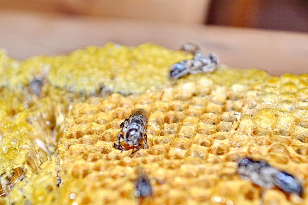 praiseworthy: Bees working on honey cells. Close up macro