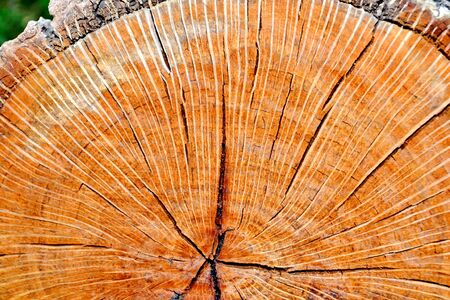 Wooden texture of a tree trunk photo