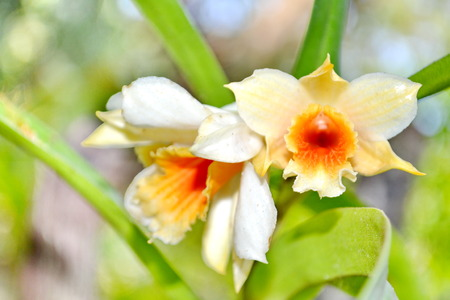 exotic plant: Wild orchid in nature
