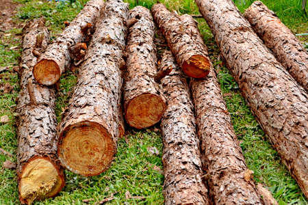 primary product: Wood preparation  Industries that have an impact on the environment. Stock Photo