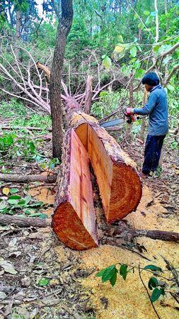 logging: Cut Logs In Logging Area