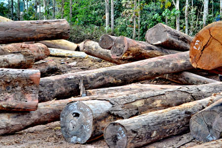 Wood preparation Industries that have an impact on the environment Stock Photo