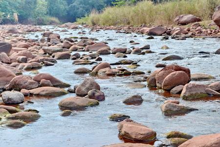 warm water fish: Pisgah Mountain Stream