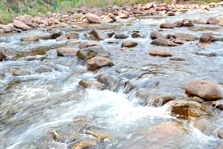 warm water fish: Pisgah Mountain Stream