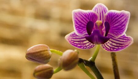floriculture: orchid