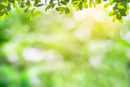 Fresh and green leaves green bokeh on nature abstract blur background green bokeh from tree.Mock up for display. montage of product,Banner or header for advertise on social media,Spring and Summer. Imagens