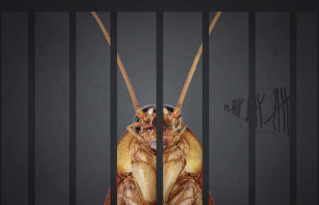 Cockroaches arrested. The charges against, Mr cockroaches, invading the home kitchen. concept protection against termites, cockroaches, fleas, agricultural pests.